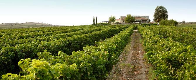 Winetour_1_KtimaGerovasiliou